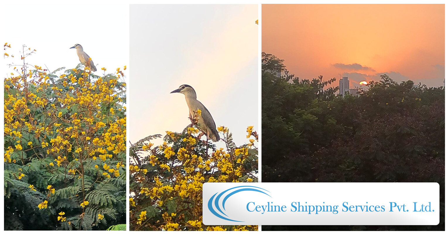 Ceylline-Shipping-Photo-of-Bird-in-tree